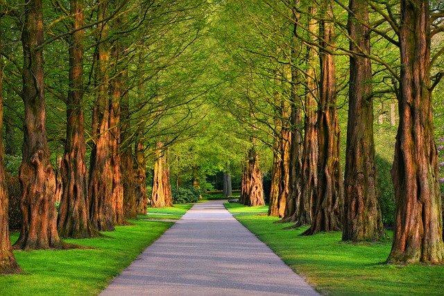 Un parco curato è fondamentale per il benessere di tutti